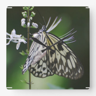 Polinating White and Black Butterfly Square Wallclock