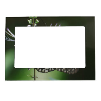 Polinating White and Black Butterfly Magnetic Frame