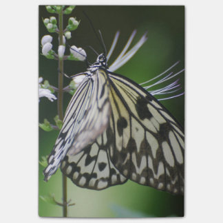 Polinating White and Black Butterfly Note