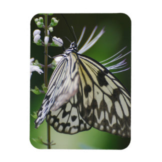 Polinating White and Black Butterfly Rectangle Magnet
