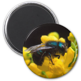 Polinización del abejorro imán redondo 5 cm