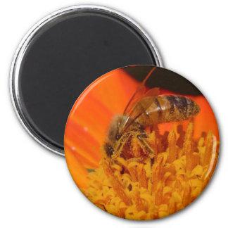 polinización imán redondo 5 cm