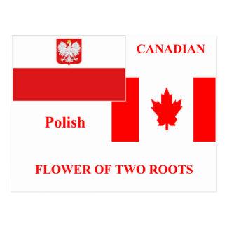 Polish-canadian Postcard