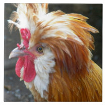 Polish Chicken Photo Ceramic Tile