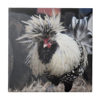 Polish Crested Rooster Ceramic Tile