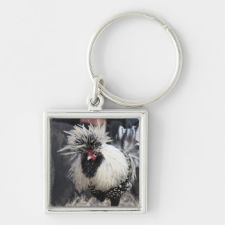 Polish Crested Rooster Silver-Colored Square Keychain
