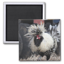Polish Crested Rooster Magnet