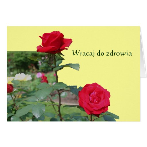 Polish Get Well Red Roses Flower Photo Note Card
