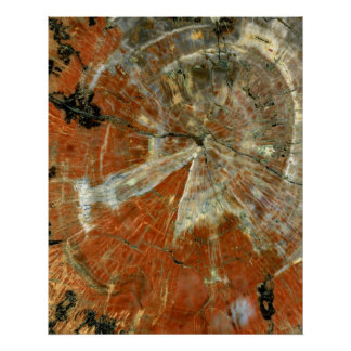 Polished Slice of Petrified Wood 16x20 Poster