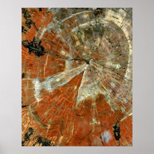 Polished Slice of Petrified Wood 16x20 Poster