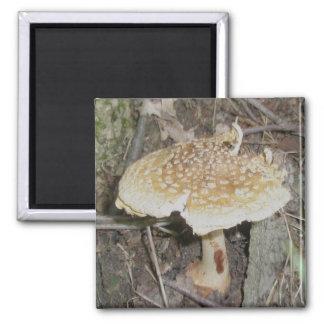Polka Dot Mushroom Magnet