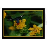 Polkadot Wasp Moth 270 Greeting Card