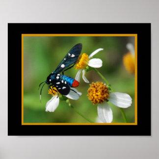 Polkadot Wasp Moth 332 Poster