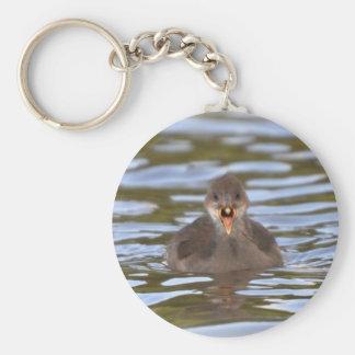 Polla de agua juvenil llavero redondo tipo pin