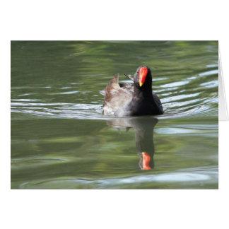 Polla de agua tarjetón