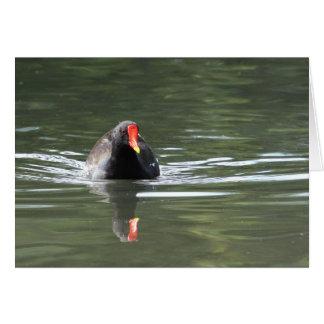 Polla de agua y reflexión tarjetas