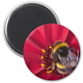Pollen days 2 inch round magnet