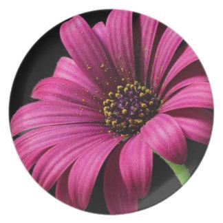 Pollen Dinner Plate