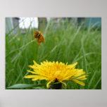 Pollenface Honeybee Posters
