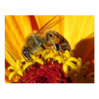 Pollinating Bee Close Up Postcard