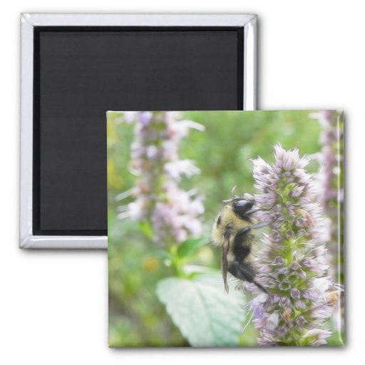 Pollination – Bumblebee on Agastache 2 Inch Square Magnet