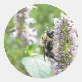 Pollination – Bumblebee on Agastache Classic Round Sticker