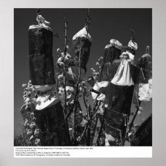 Pollinization controlado, huerta de la pera, UCD, Póster