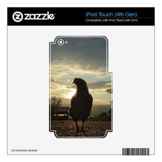 Pollo afortunado iPod touch 4G calcomanías