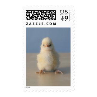 Pollo amarillo del bebé que se sienta, 3 días de sellos postales