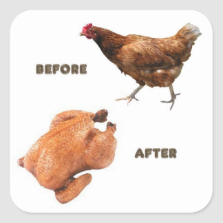 Pollo antes y después pegatina cuadrada
