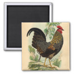 Pollo antiguo del gallo del vintage de la impresió imanes de nevera