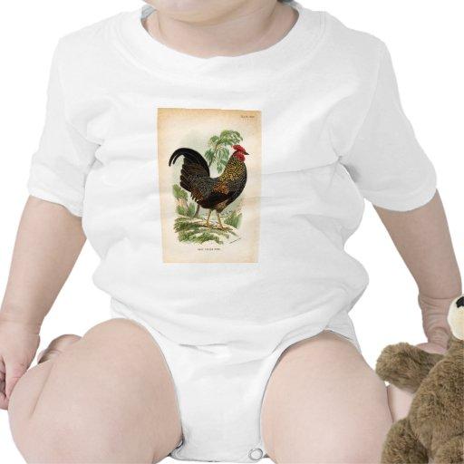 Pollo antiguo del gallo del vintage de la trajes de bebé