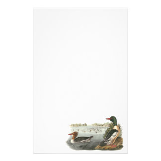 Pollo de agua común, Juan Audubon Papeleria Personalizada