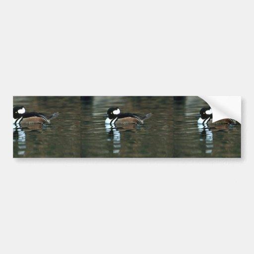 Pollo de agua encapuchado (Drake) Etiqueta De Parachoque
