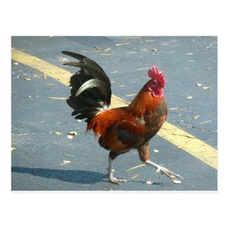 Pollo de Key West Postal
