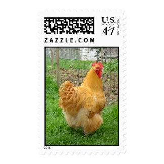 Pollo de Orpington Timbre Postal