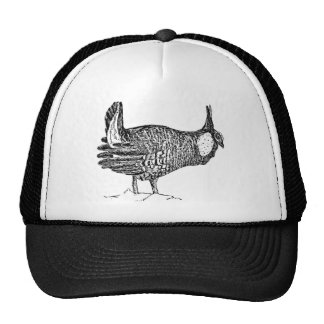Pollo de pradera gorro