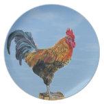 Pollo del animal del personalizar del cielo del ga plato de cena