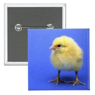 Pollo del bebé pin cuadrada 5 cm