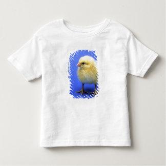 Pollo del bebé playera