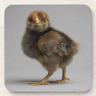 Pollo del bebé posavaso