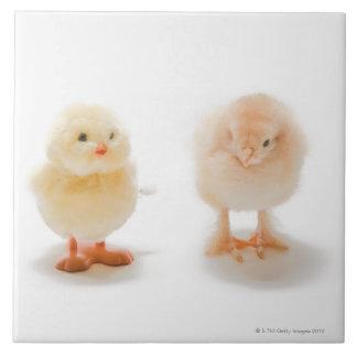 Pollo del bebé y pollo mecánico falso azulejo cuadrado grande