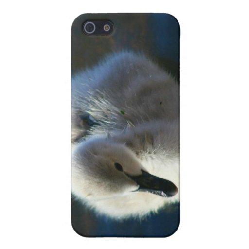 Pollo del cisne de la natación iPhone 5 funda