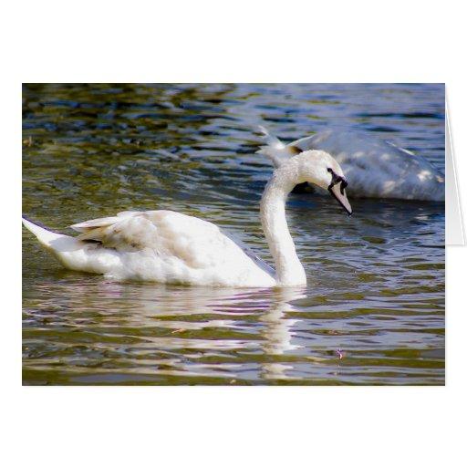 Pollo del cisne del cisne mudo tarjeta