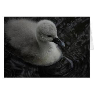 pollo del cisne en gris tarjeta pequeña