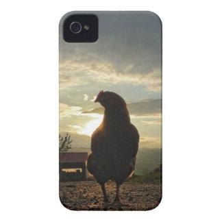Pollo divertido en contraluz Case-Mate iPhone 4 cárcasas