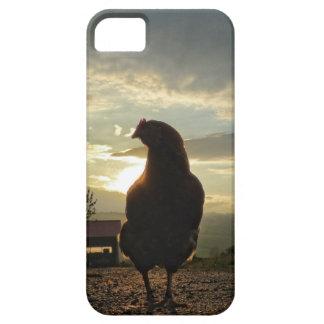 Pollo divertido en contraluz iPhone 5 funda