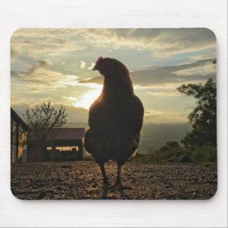 Pollo divertido en contraluz alfombrillas de ratones
