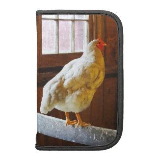 Pollo en granero organizadores