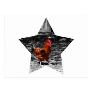 Pollo estupendo de la estrella tarjeta postal